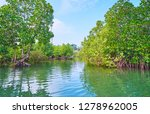the red mangrove forest forms... | Shutterstock . vector #1278962005