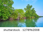 the brackish waters of kangy... | Shutterstock . vector #1278962008