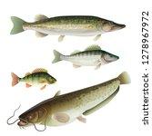 set of freshwater predatory... | Shutterstock .eps vector #1278967972