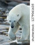 canada  nunavut territory ... | Shutterstock . vector #1279061635
