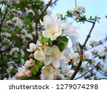 in the spring  the branches of... | Shutterstock . vector #1279074298