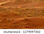 gemsbok run with orange sand... | Shutterstock . vector #1279097302