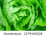 closeup fresh organic green... | Shutterstock . vector #1279140328