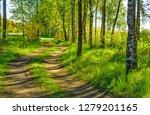 sunny summer morning outside... | Shutterstock . vector #1279201165