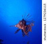 underwater world in deep water...   Shutterstock . vector #1279236115