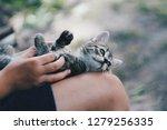 Cute Multicolored Kittle Kitten