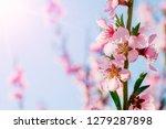 a spring pink flowers... | Shutterstock . vector #1279287898
