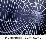 The Spider Web  Cobweb  Closeu...