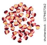 purple corn isolated on white... | Shutterstock . vector #1279607362