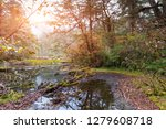 forest landscape of the... | Shutterstock . vector #1279608718