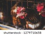 eggs chickens  hens in...   Shutterstock . vector #1279710658