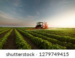 tractor spraying a field of... | Shutterstock . vector #1279749415