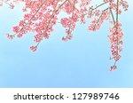 Thailand Sakura Pink Flower In...