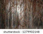 background of wooden wall and...   Shutterstock . vector #1279902148