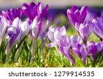 beautiful spring background...   Shutterstock . vector #1279914535