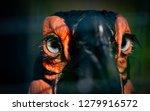 ground hornbill eyes closeup in ...   Shutterstock . vector #1279916572