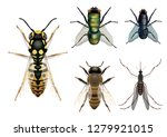 naturalistic insects board ... | Shutterstock .eps vector #1279921015