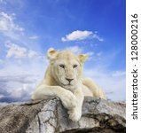 White Lion With Blue Sky...