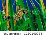 long snouted seahorse along... | Shutterstock . vector #1280140735