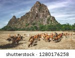 large livestock of cows in a... | Shutterstock . vector #1280176258
