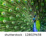 Peacock With Beautiful...