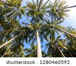 looking up at some beautiful... | Shutterstock . vector #1280460592