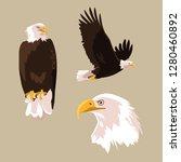 bald eagle bird set poses | Shutterstock .eps vector #1280460892