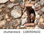 common kestrel  falco... | Shutterstock . vector #1280504632