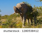 a solitary old bull elephant... | Shutterstock . vector #1280538412