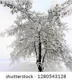A Tree Loaded With Snow