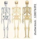 human skeleton | Shutterstock .eps vector #128076392