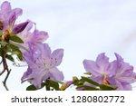exotic flower close up   Shutterstock . vector #1280802772