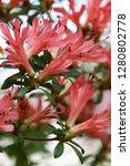 exotic flower close up   Shutterstock . vector #1280802778