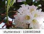 exotic flower close up   Shutterstock . vector #1280802868