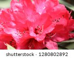 exotic flower close up   Shutterstock . vector #1280802892