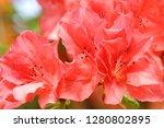 exotic flower close up   Shutterstock . vector #1280802895