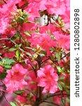 exotic flower close up   Shutterstock . vector #1280802898