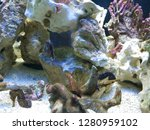 beautiful seabed and coral reef | Shutterstock . vector #1280959102