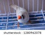 finch bird in a cage | Shutterstock . vector #1280962078