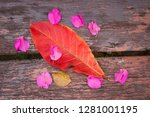 plumeria flowers and frangipani ... | Shutterstock . vector #1281001195