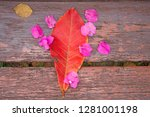 plumeria flowers and frangipani ... | Shutterstock . vector #1281001198