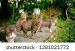 Cat Group In Nnature