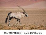 South African Oryx   Oryx...