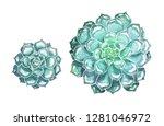 set of succulents hand drawn... | Shutterstock . vector #1281046972