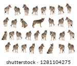 collage of wolves   canis lupus ... | Shutterstock . vector #1281104275