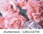 sweet pink roses in vintage... | Shutterstock . vector #1281116755