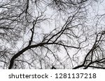 many tangled branches... | Shutterstock . vector #1281137218