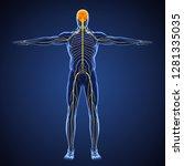 human nervous system...   Shutterstock . vector #1281335035