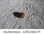 isolated brown coconut on the... | Shutterstock . vector #1281336175