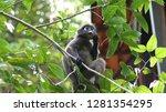 kedah  langkawi  malaysia   apr ...   Shutterstock . vector #1281354295